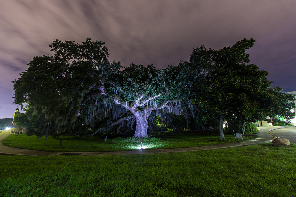 """Dueling Oaks"" at City Park! One of our favorite subjects! Photograph by NOLA @ Night participant Bryce Ell. ©Bryce Ell 2014"
