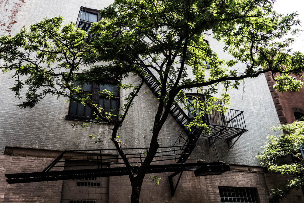 Zack Smith Photography New York City Fire Escape Building Tree