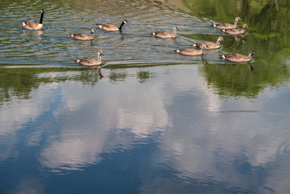 Zack Smith Photography North Carolina Brevard School of Music Center ducks pond beautiful nature reflection
