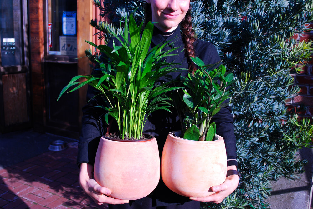 Left: Areca Palm, Right: Zamioculcas