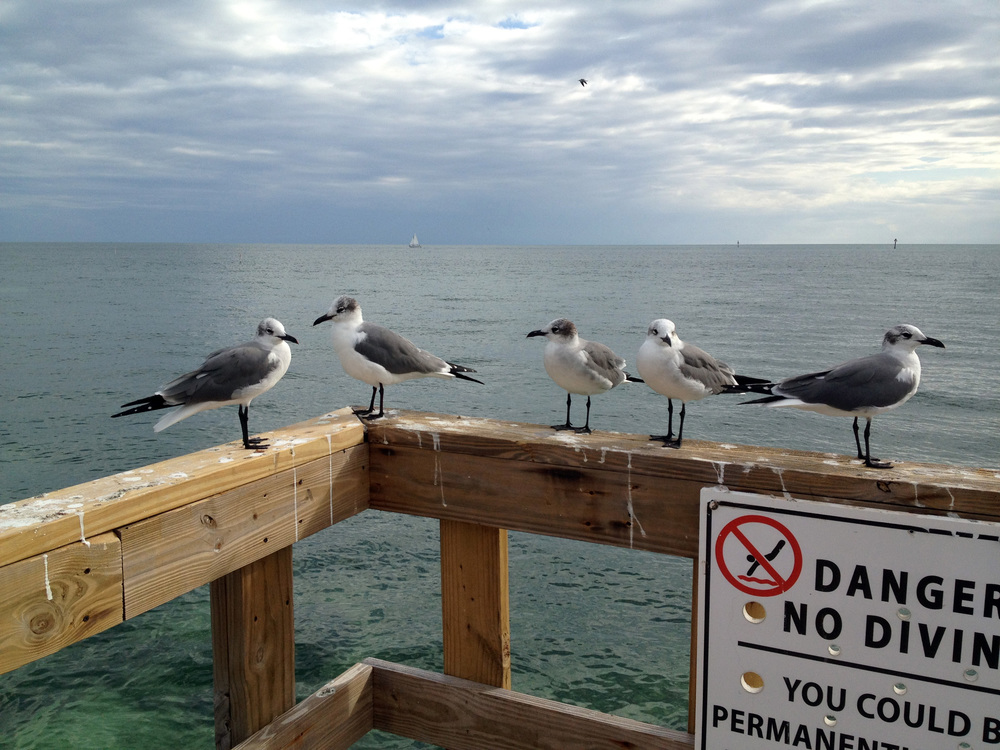 Gulls_Edit.jpg