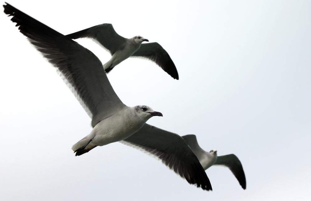 Gulls2_Edit.jpg