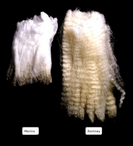 NZ Merino wool fibres