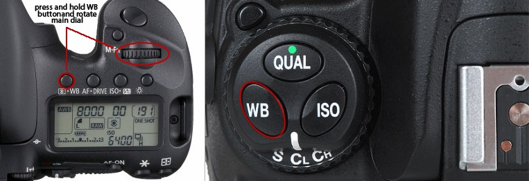 Left: Canon / Right: Nikon  Sometimes you can find the White Balance buttons on the top of the camera