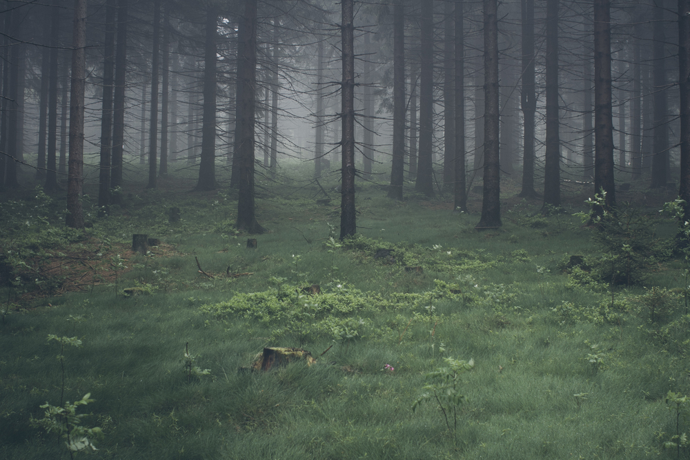 foggy-forests-are-great.jpg