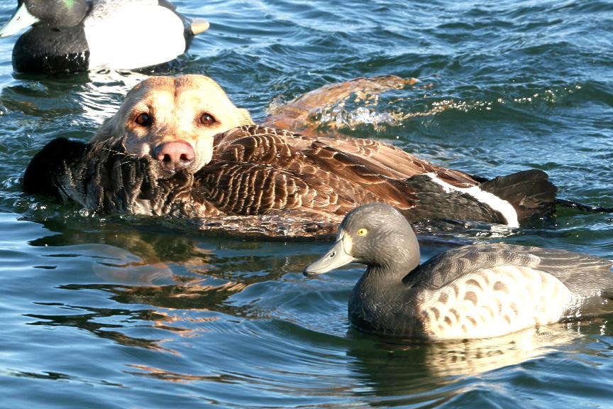 deke goose 5.jpg