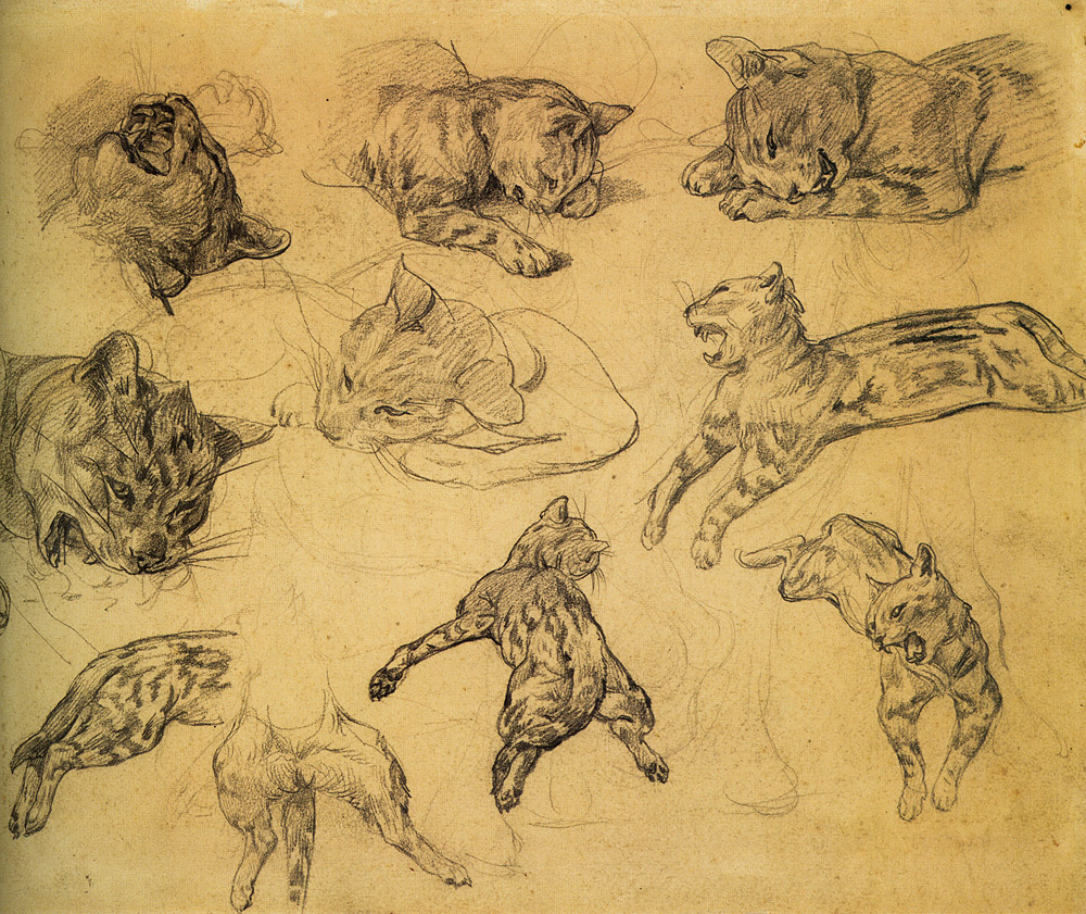 Sketches of a Wild Striped Cat, 1817-18  Pencil on paper (12x15 in)