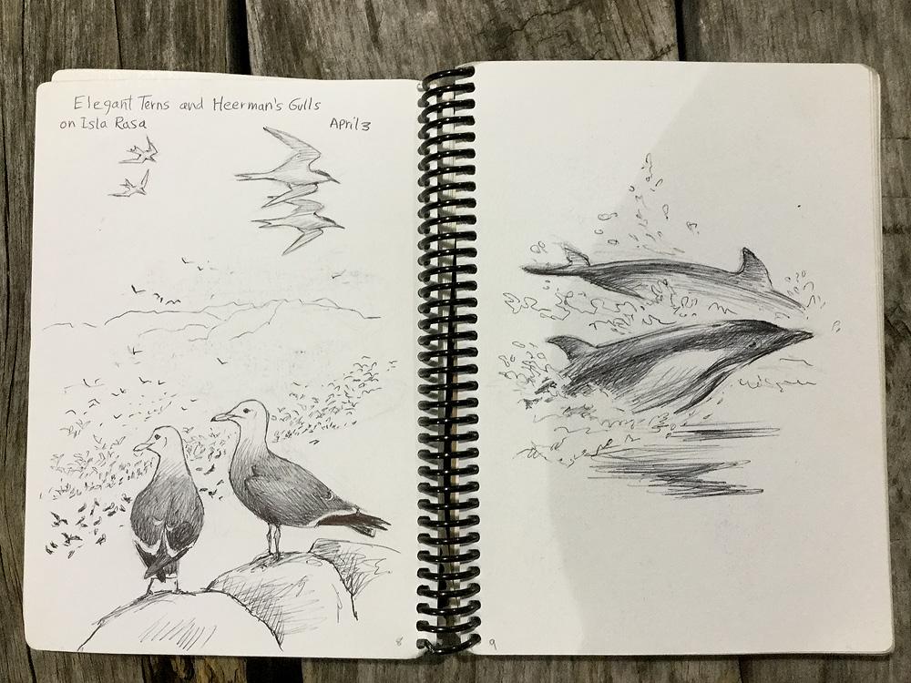 Sketches03.jpg