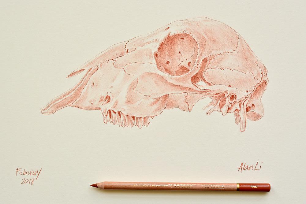RedChalk_Skull.jpg