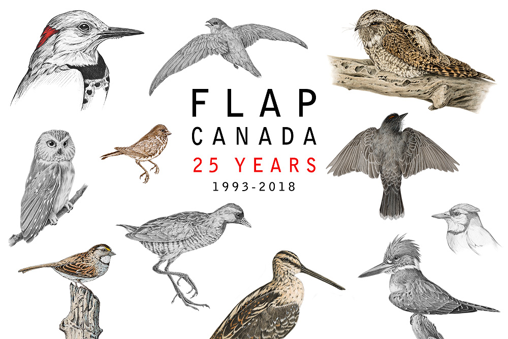 FLAP_ALL_BIRDS.jpg