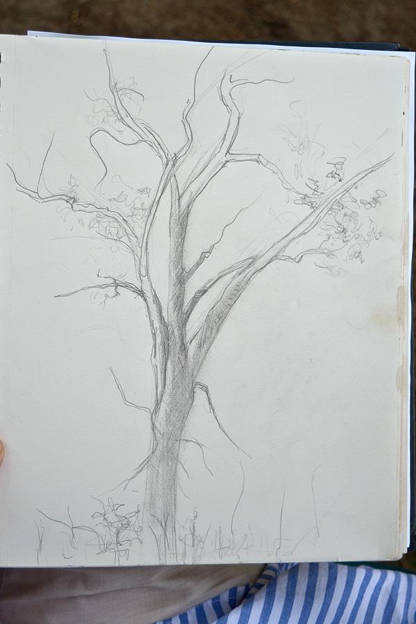 Oak_08.jpg