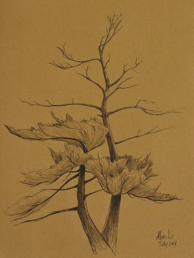 White Pine, pencil on Kraft paper