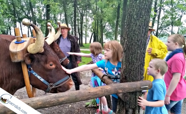 Oxen ride, carriage ride, or wagon ride? Top 5 tips for visiting Nauvoo