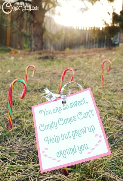 Decorate your neighbor's yard with candy canes- Love this idea!