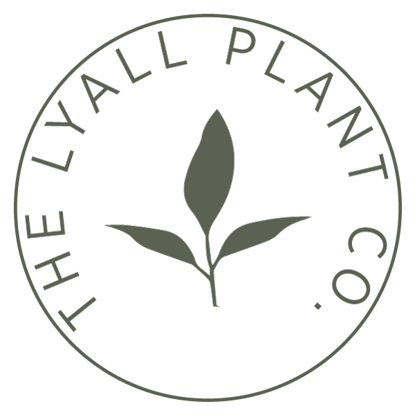 The Lyall Plant CO. - Logo for small store selling plants and home decor.