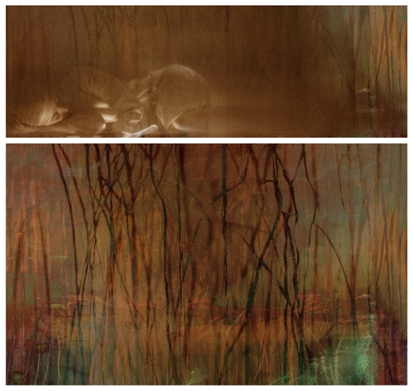 Surface Tension: Root Series, 1.2 , 2016 Chromogenic colour print,  diptych, 14 x 42 inches, 25 x 42 inches