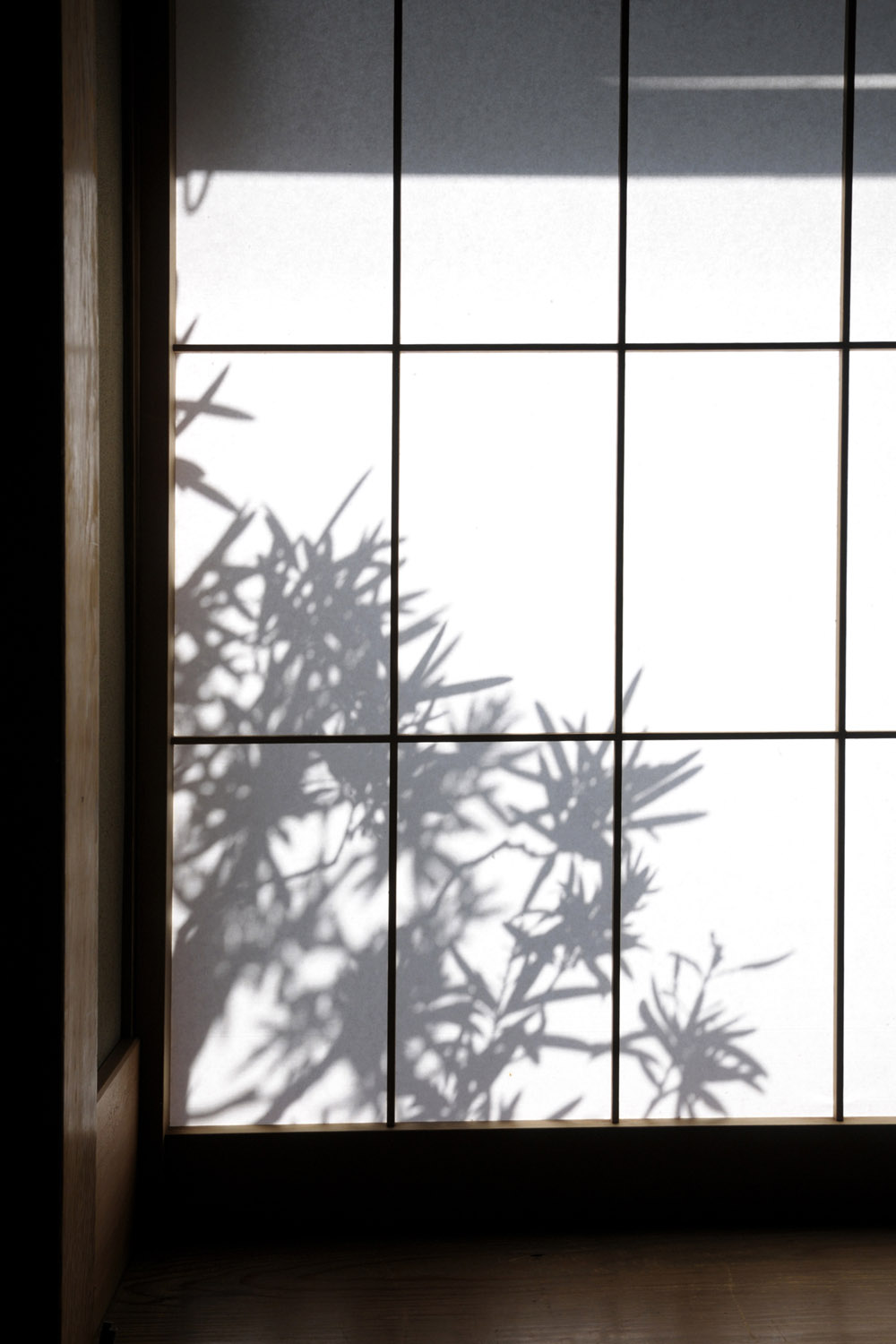 Plant shadow on a shoji screen in Jodoji