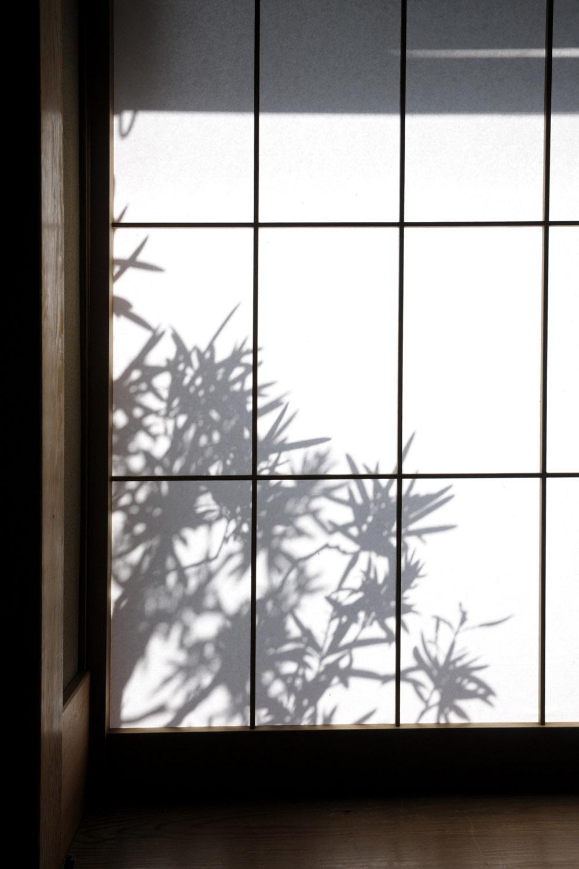 Plant shadow on a shoji screen in Jodoji