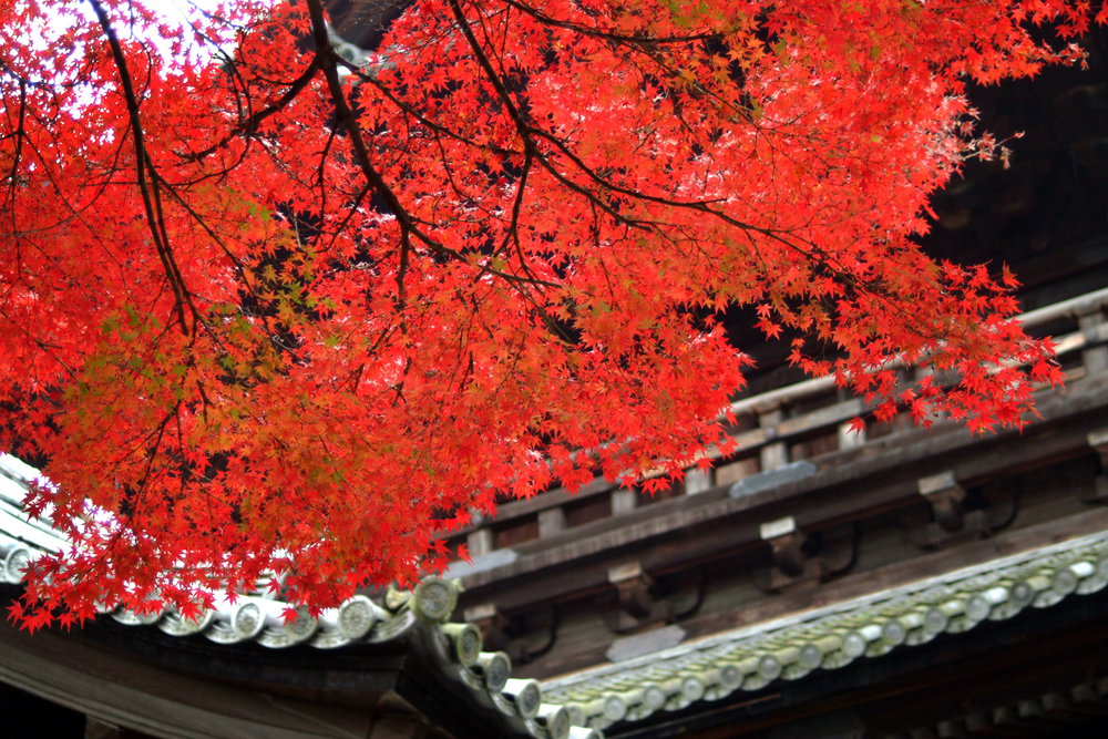 Autumn foliage at Nanzenji Temple