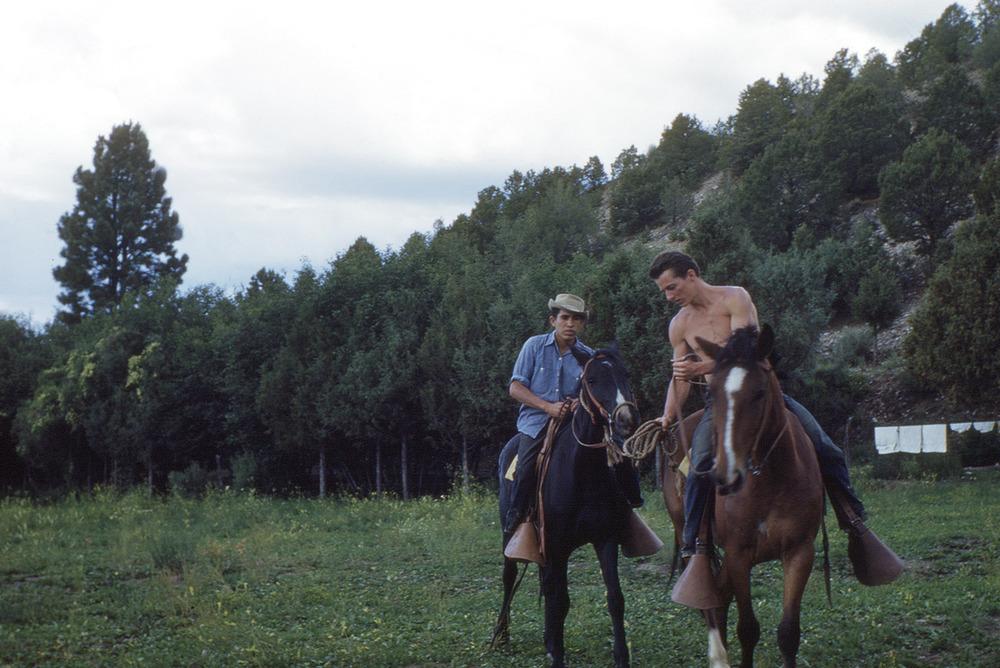 bud horses.jpg