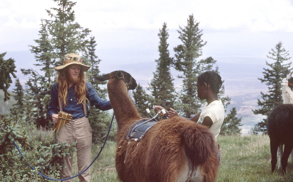Llamas in Lama