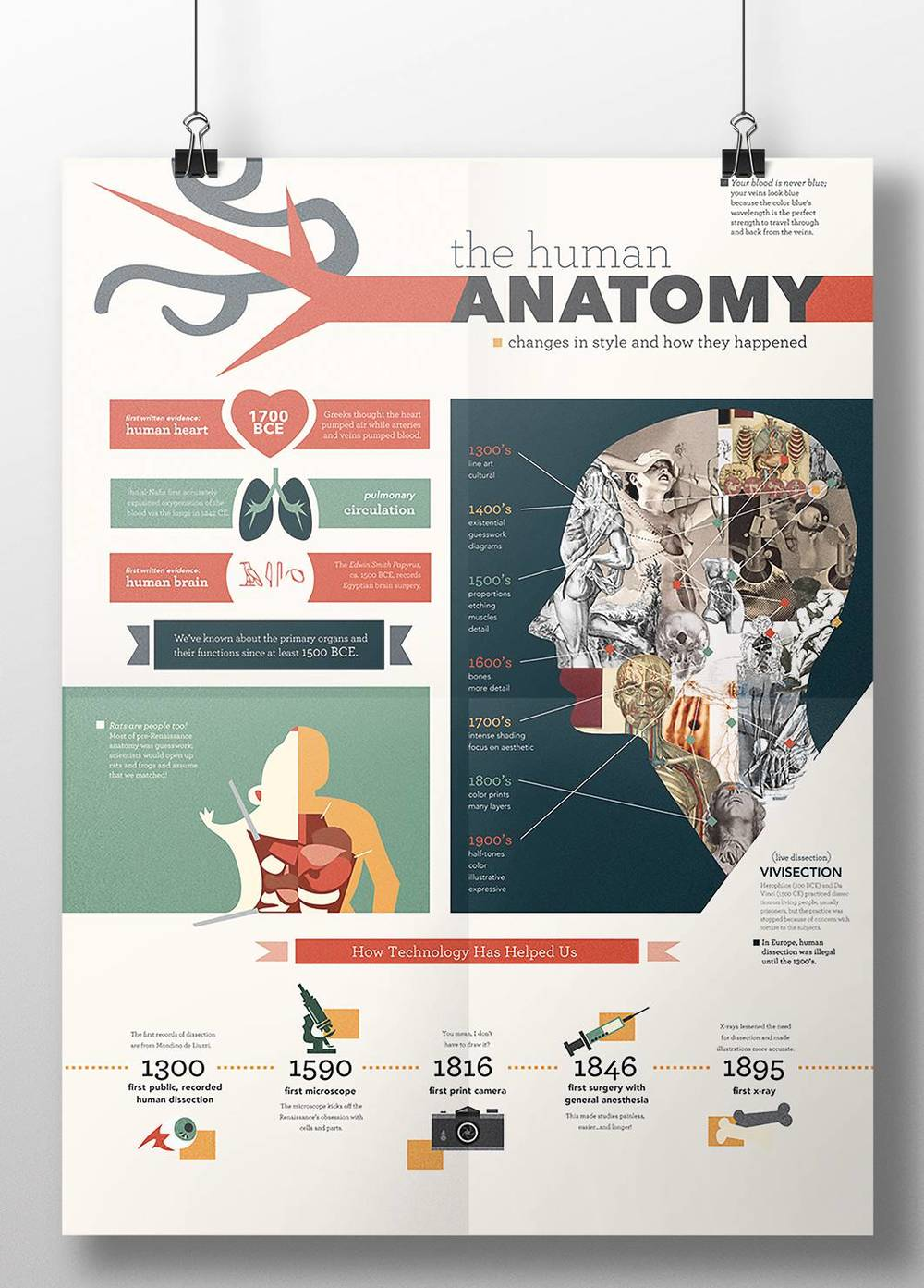 Anatomy Infographic