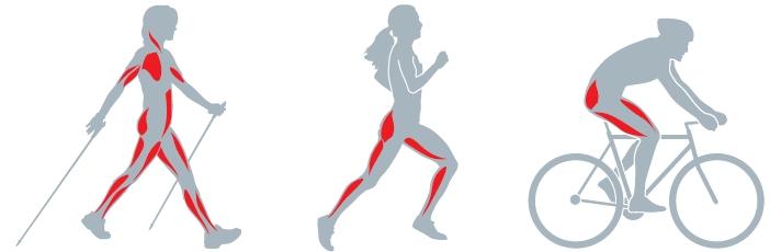 Musculatura nordic Walking