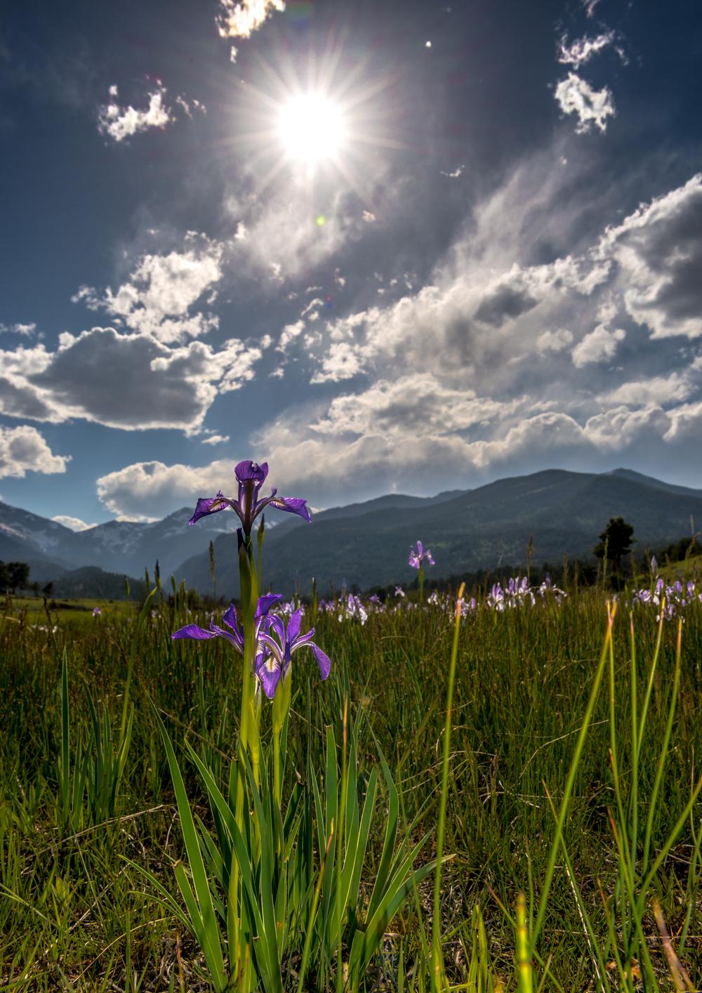 Rays of Irises