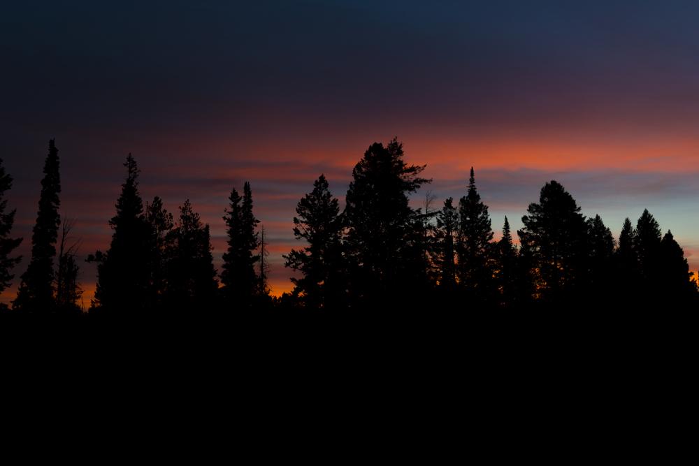 Pine Skyline