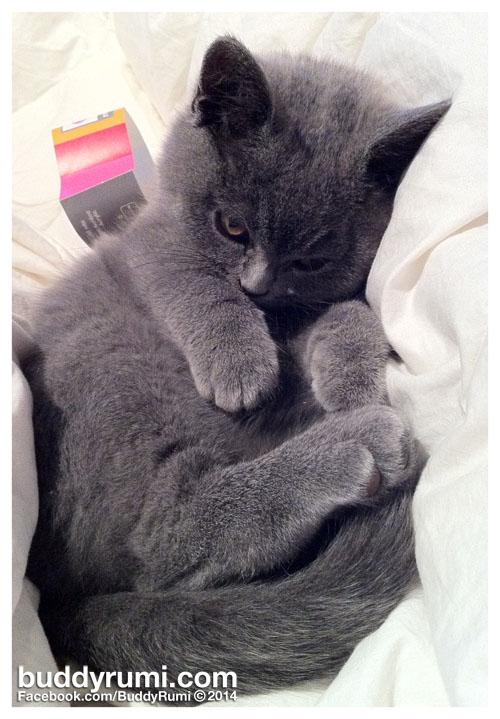 Kitty cat kat