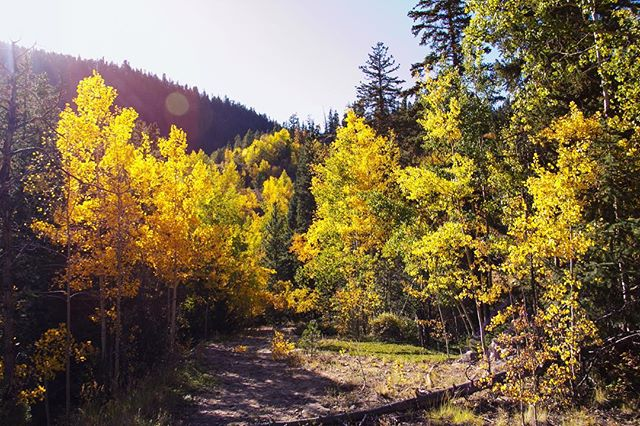 Happy first day of fall. 🍂✨ #vscocam #fall #leaves #colorado #guanellapass