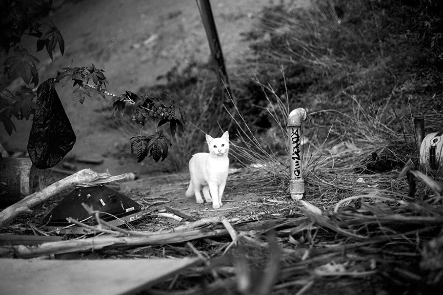 Cat_Gang-2872.jpg
