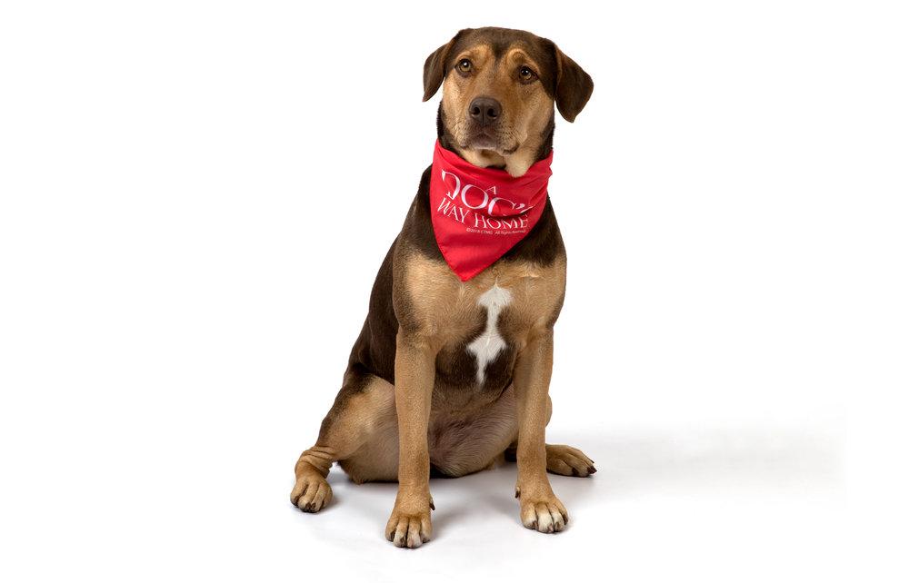 A Dogs Way_Press Junket_Danielle_Spires-1558.jpg