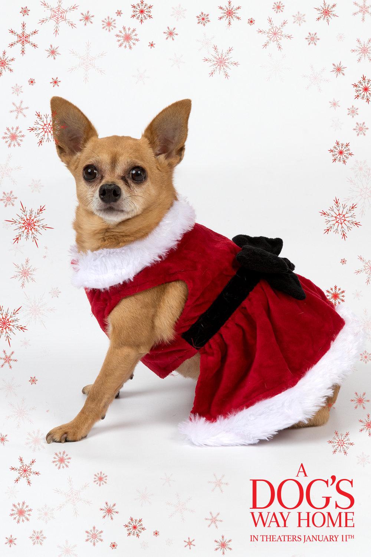 A Dogs Way_CAROLE MAR_Press Junket_Danielle_Spires-1519.jpg