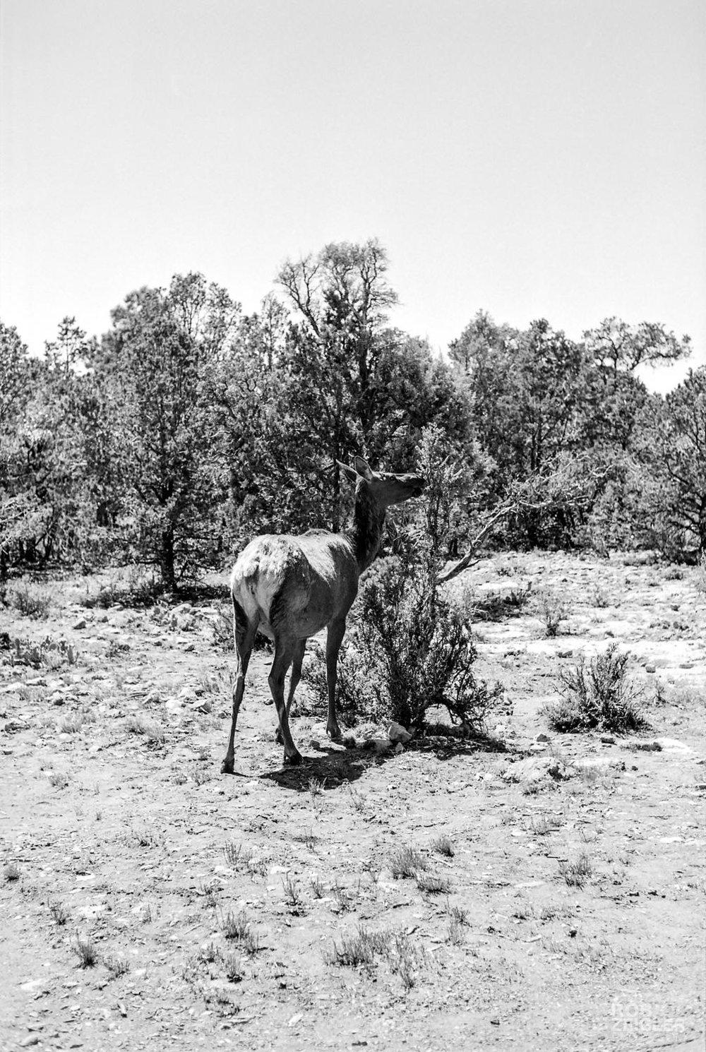 RT2018_Grand_Canyon_020.jpg