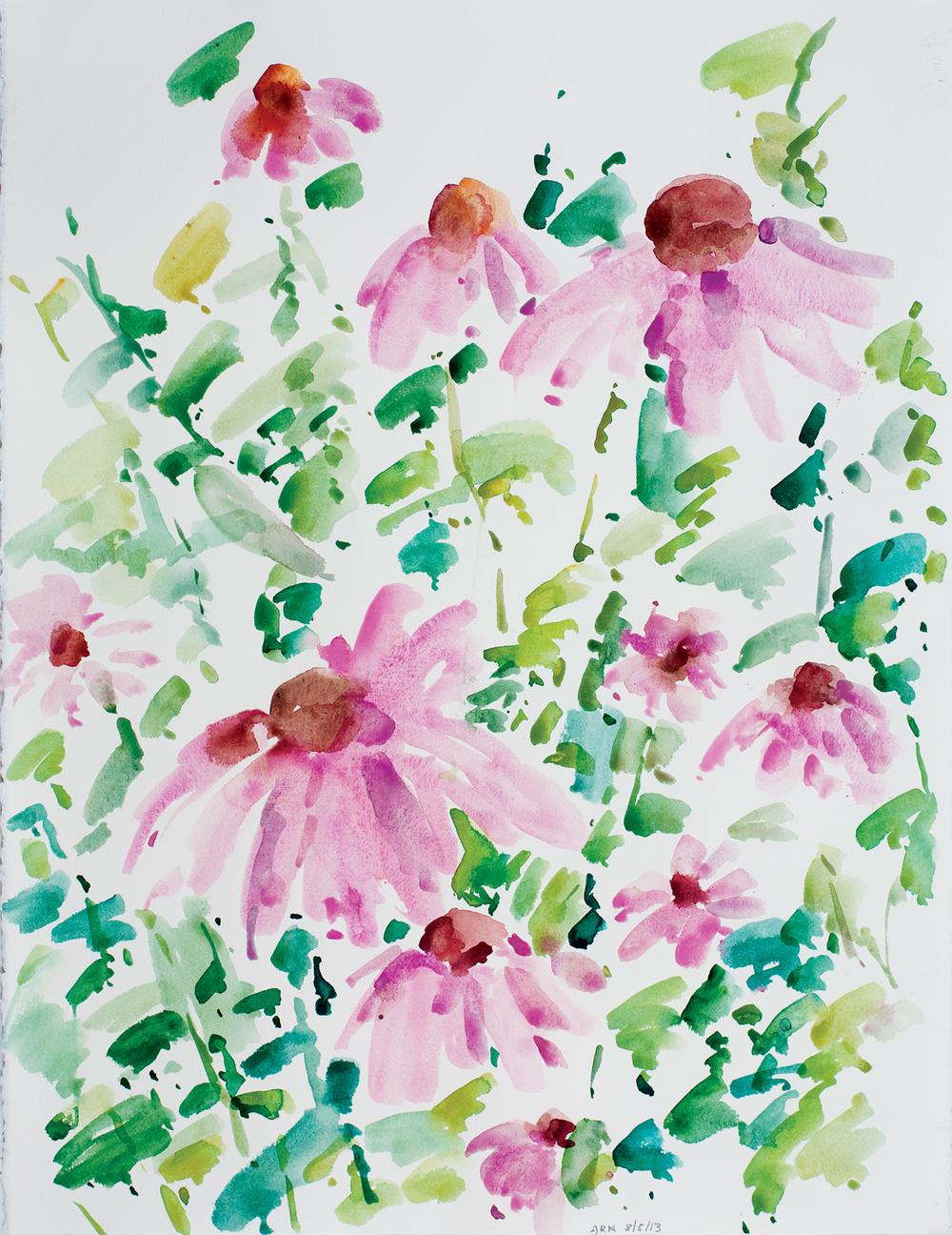 Echinacea-8513-22x30