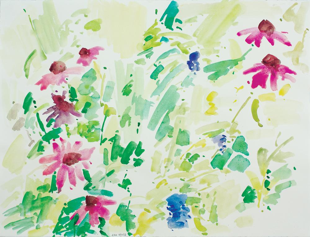Echinacea-81013-22x30
