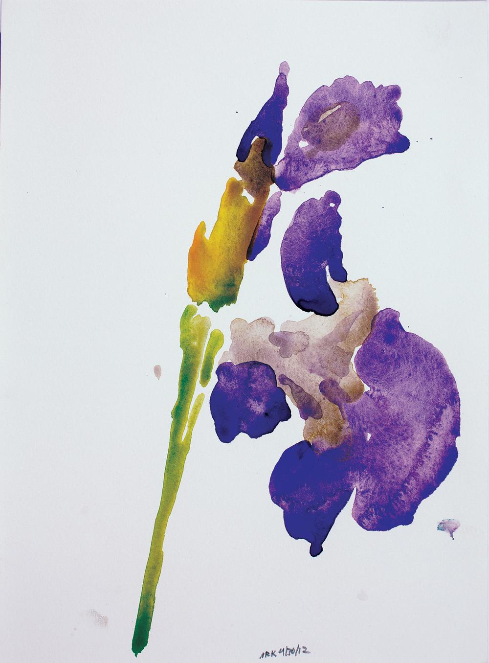 Iris-42012-12x10_2