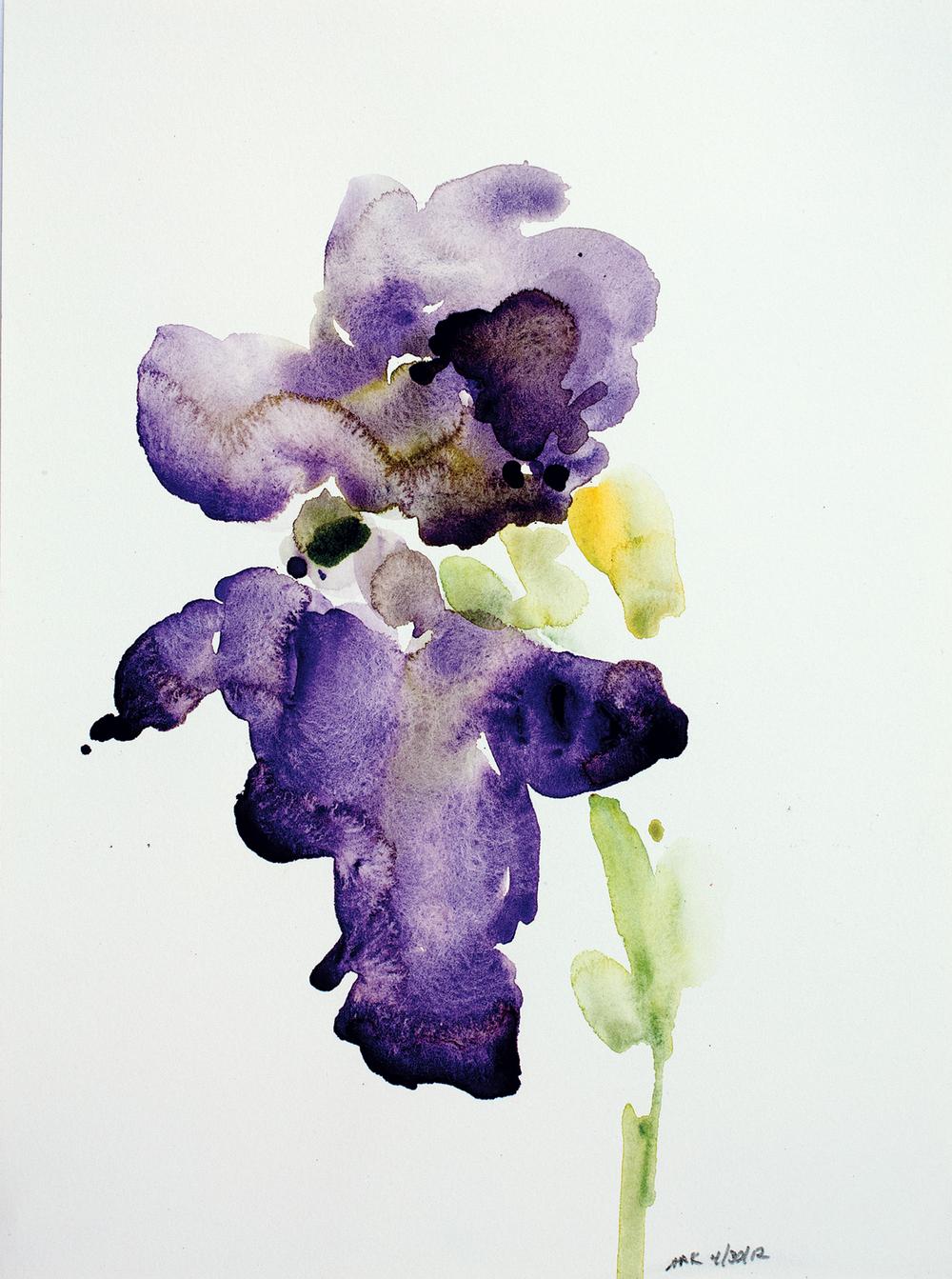 Iris-43012-12x10_1