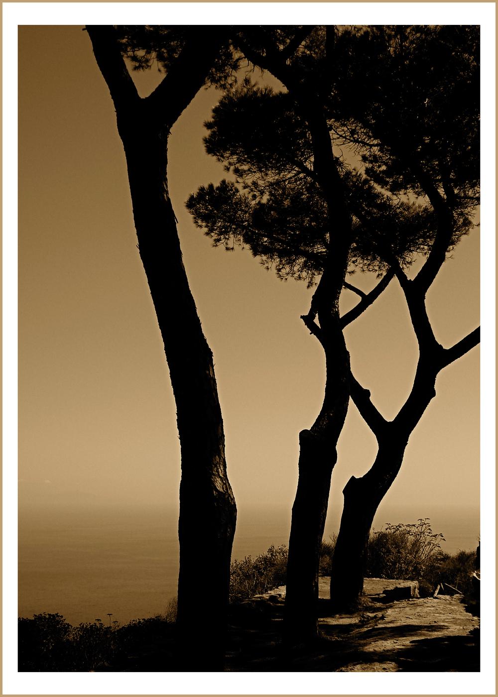3-TreesAnaCapri.jpg