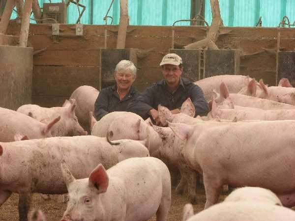 Farmers and their pigs