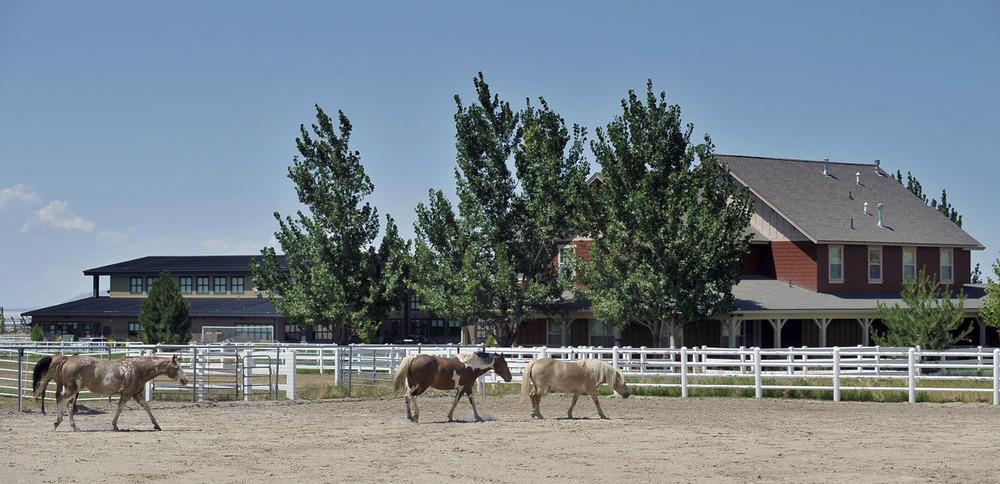 HorsesCommercial.jpg