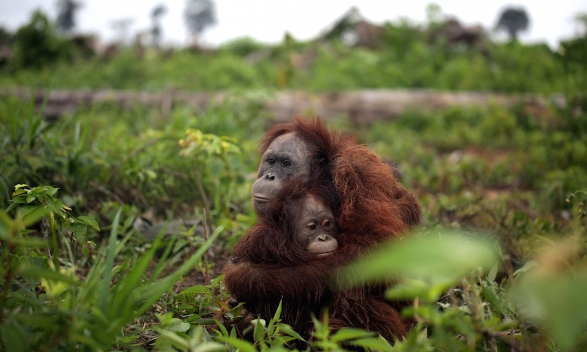 Palm oil study.jpg