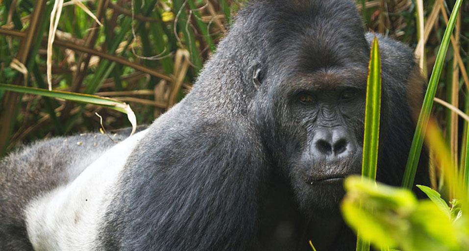 Ecotourism may endanger wild animals
