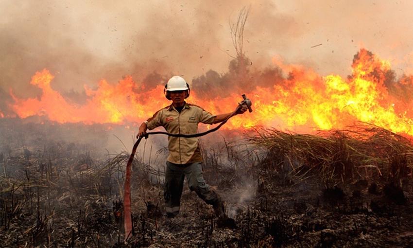 Indonesian fires rip through orangutan habitat
