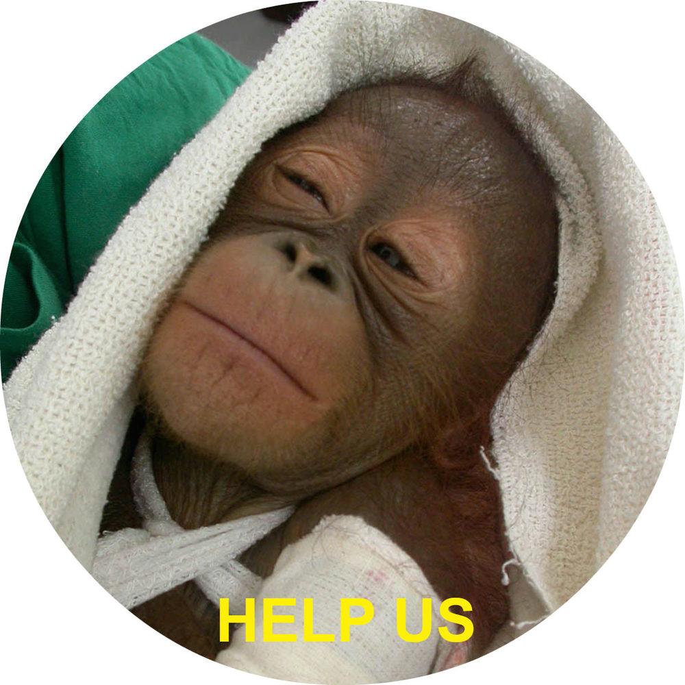 Orangutan help us thumb.jpg