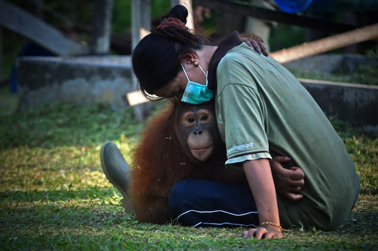 orangutan saved.jpg