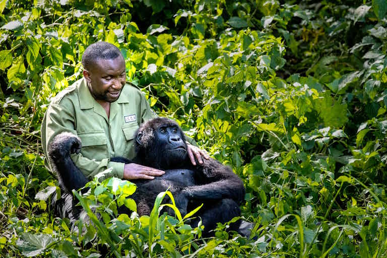 orphan gorilla and keeper.jpg