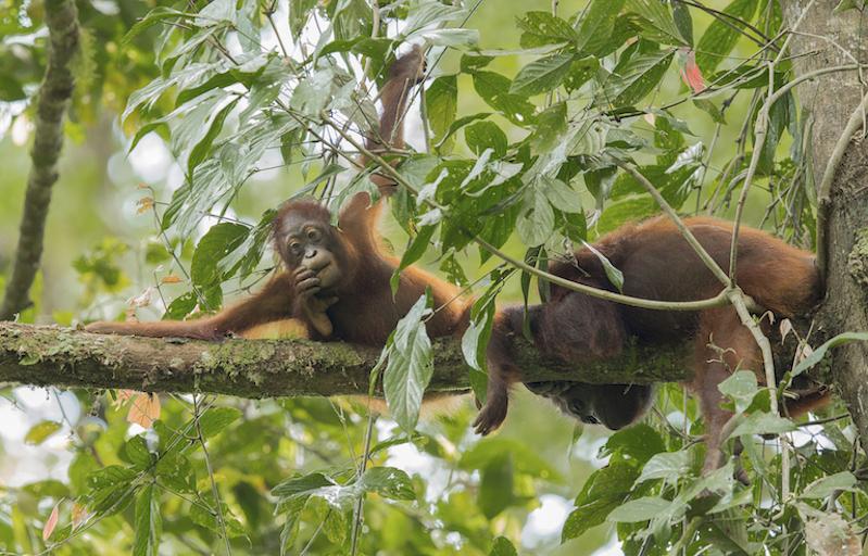 wild orangs.jpg