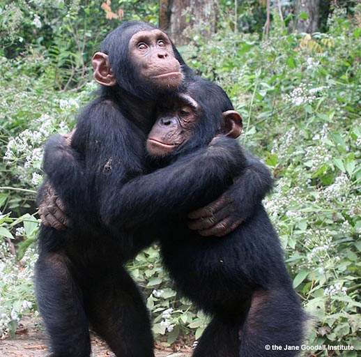 chimp hug.jpg